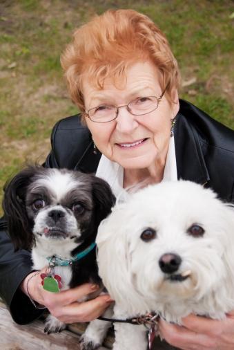 Мифов о домашних животных собаки