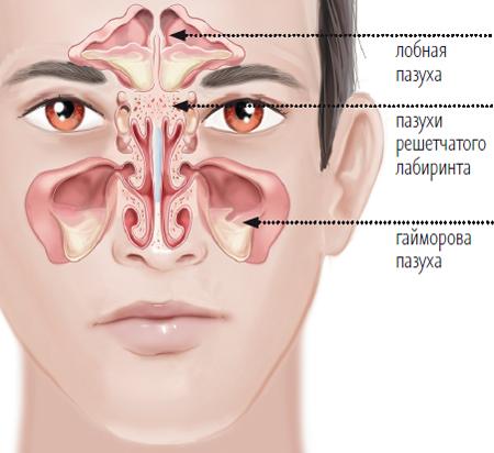 Нос изнутри