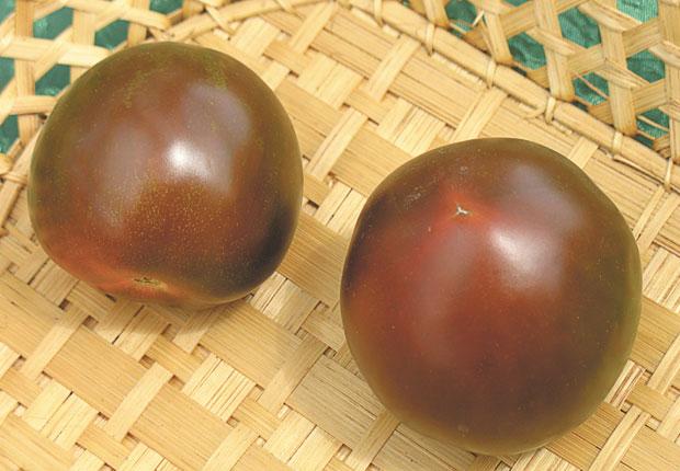 Сорт бурых помидор