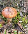 маринад для грибов рецепт