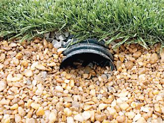 Как правильно посадить газон на даче