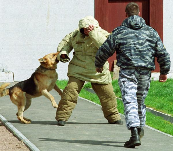 Доклад о служебных собаках 7782