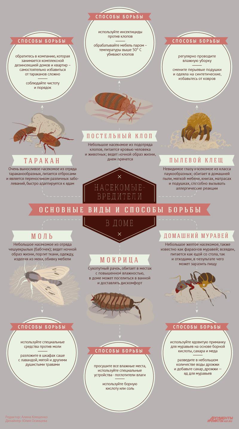 фото насекомые домашние вредители